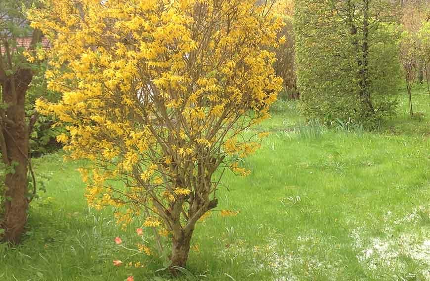 30 Tage vor dem KunstHandFest Barnitz - Aprilwetter mit Hagel und zarten Blüten